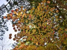 紅葉上高地10月下旬、河童橋から明神池、梓川左岸