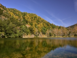 紅葉上高地10月下旬、明神池一之池 (3)