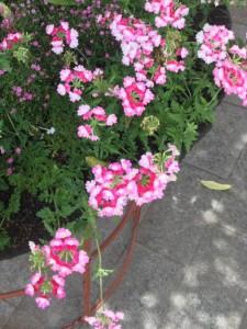 梅雨入り前の花時計公園 六月六日