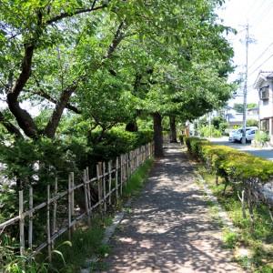 タウンスニーカー東コース ⑭あがたの森公園