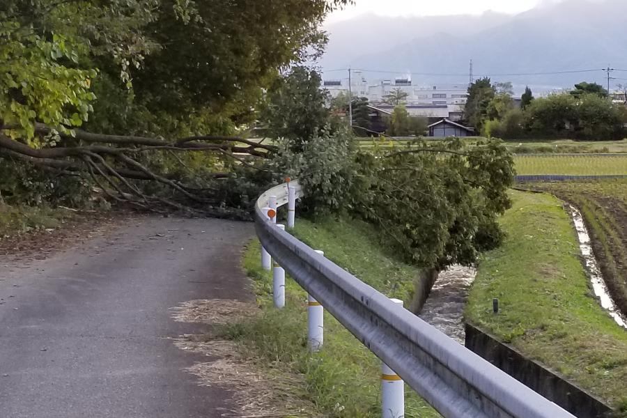 台風21号の置き土産 倒木・夕焼け・冠雪